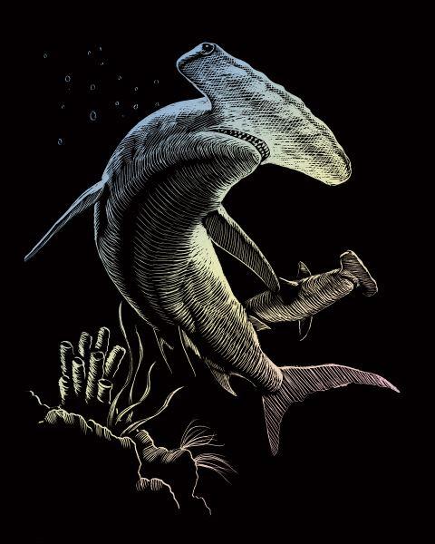 Škrábací obrázek holografický - Žralok - kladivoun
