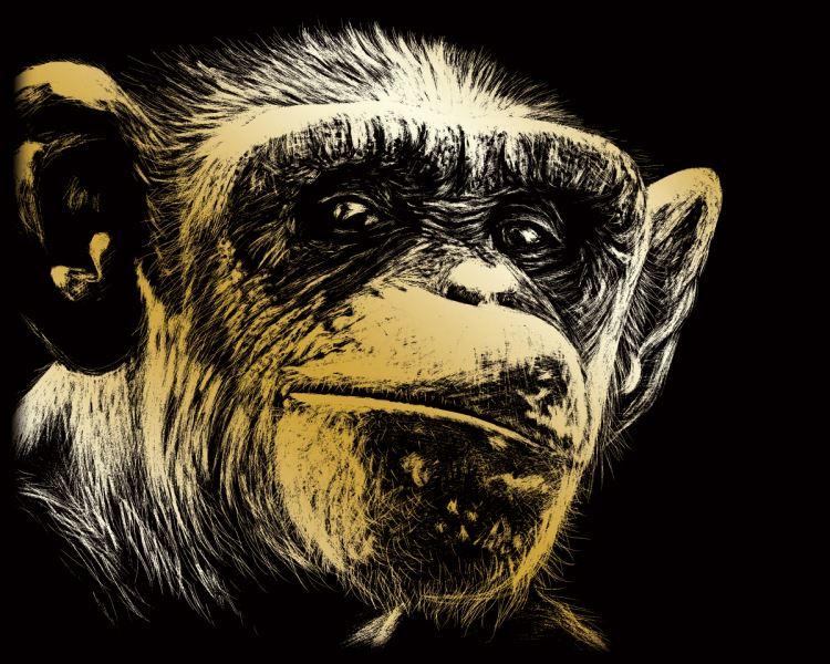 Škrábací obrázek zlatý - Šimpanz - opice