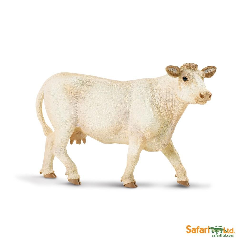 Charolaiská kráva