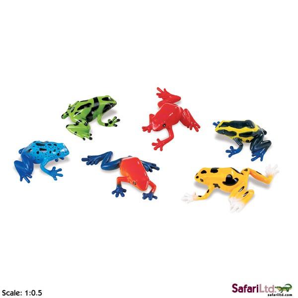 Žabka z čeledi pralesníčkovití
