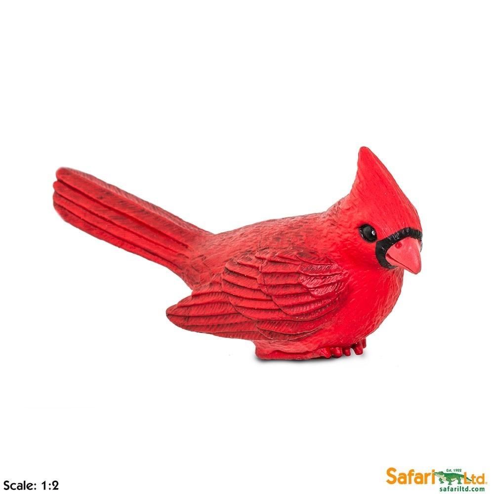 Kardinál červený