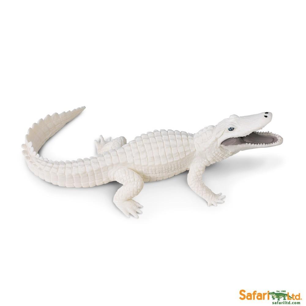 Krokodýl albín