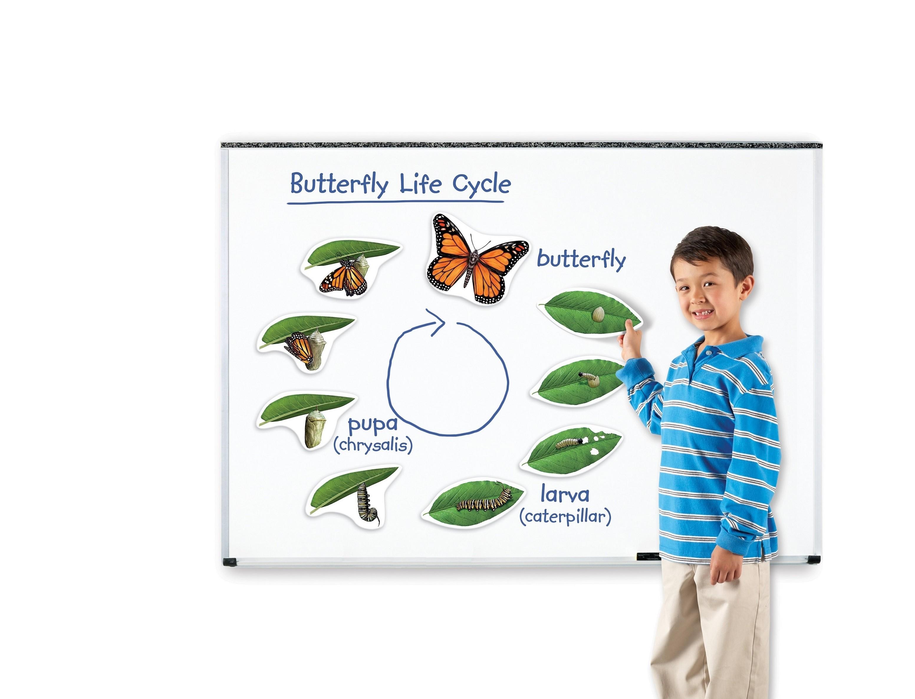 Magnetický životní cyklus - Motýl