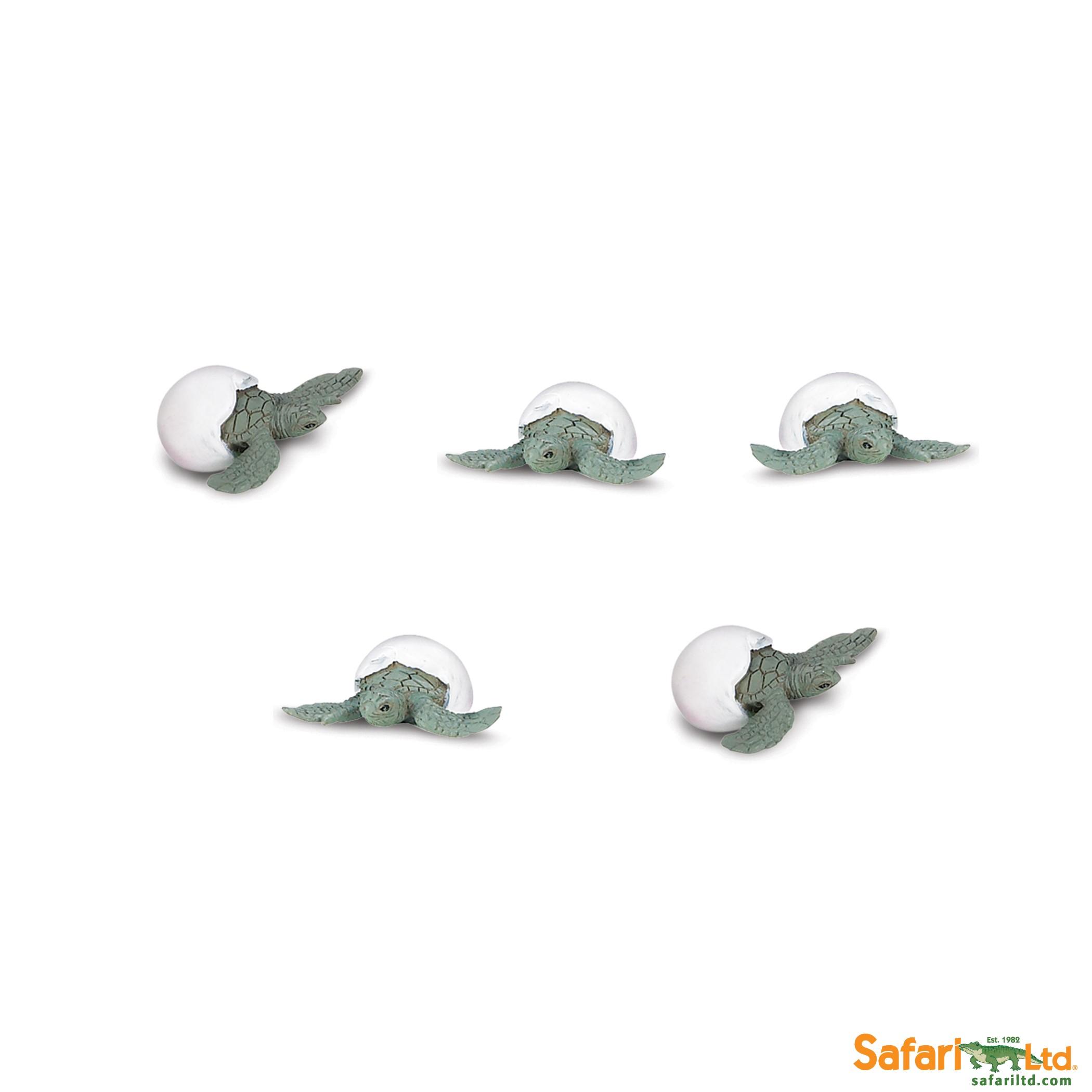 Mláďata mořské želvy - Good Luck Minis
