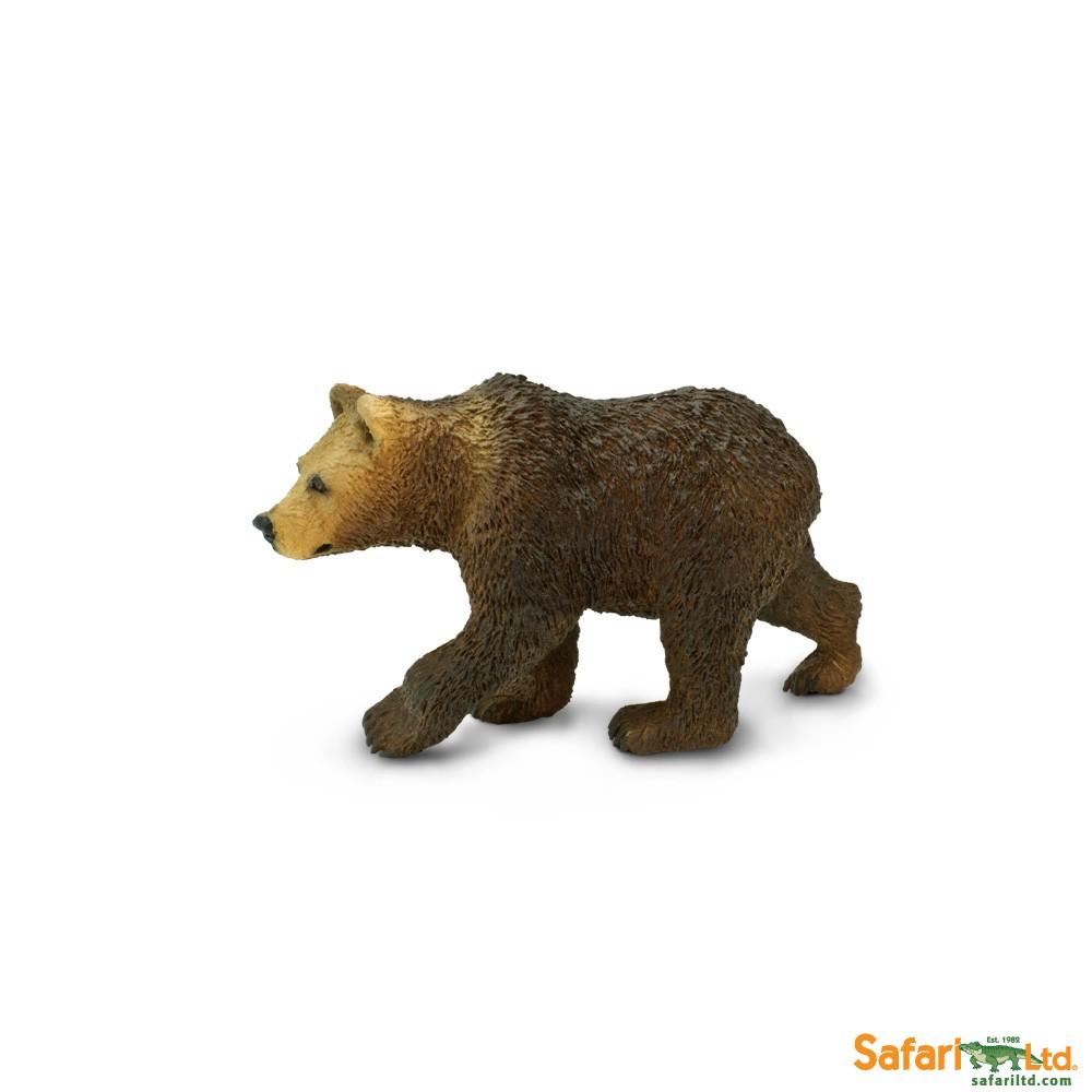 Medvěd Grizzly - mládě