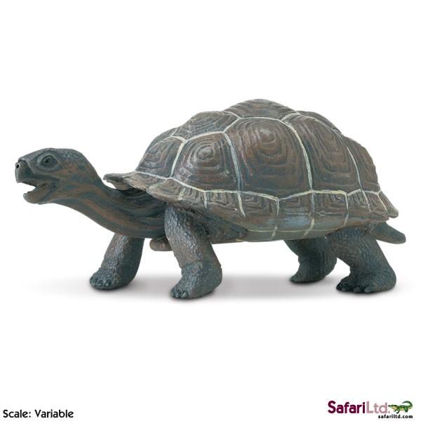 Mládě želvy galapážské