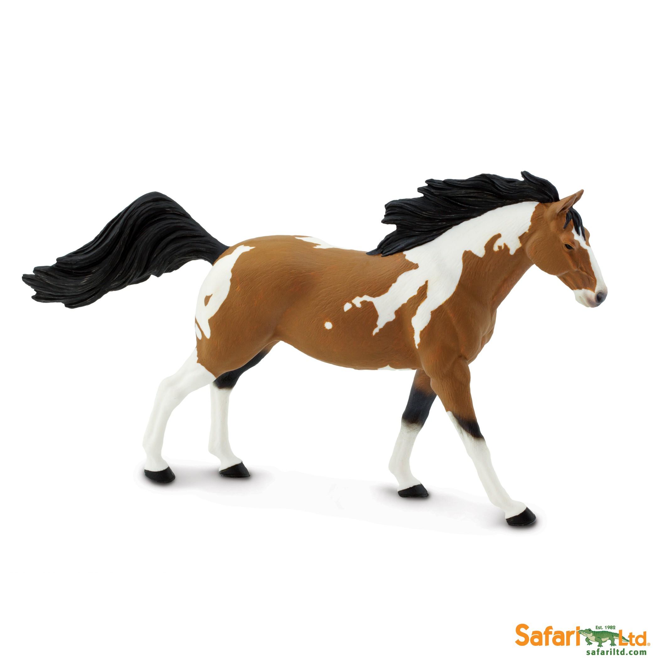 Pinto Mustang hřebec