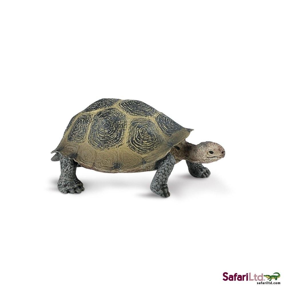 Želva pouštní