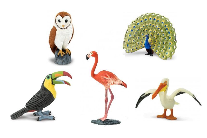 Ptáci (5 ks)