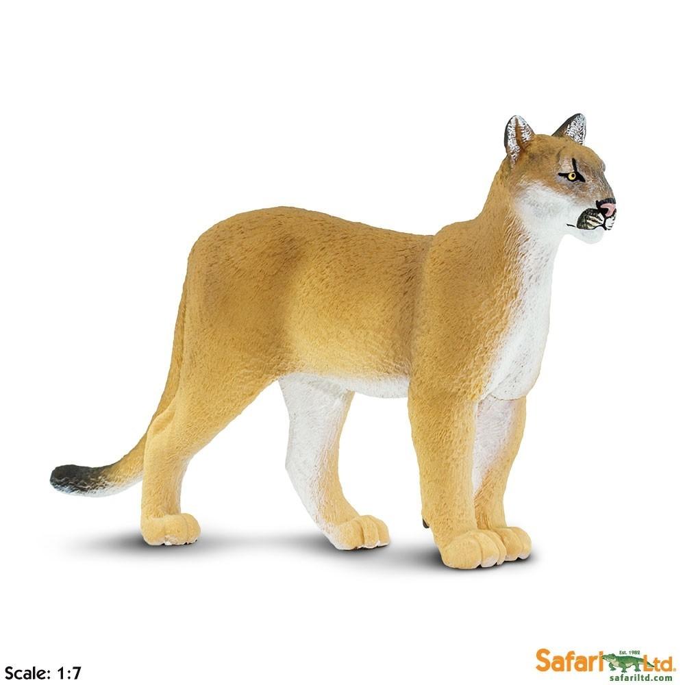 Puma floridská