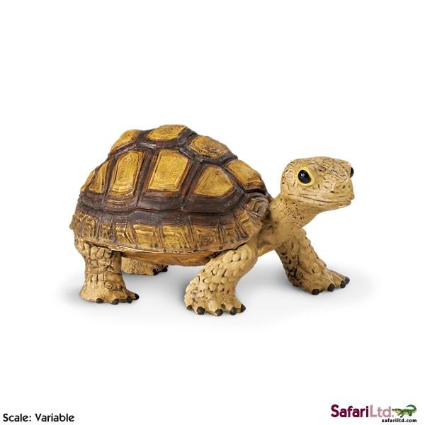 Mládě želvy