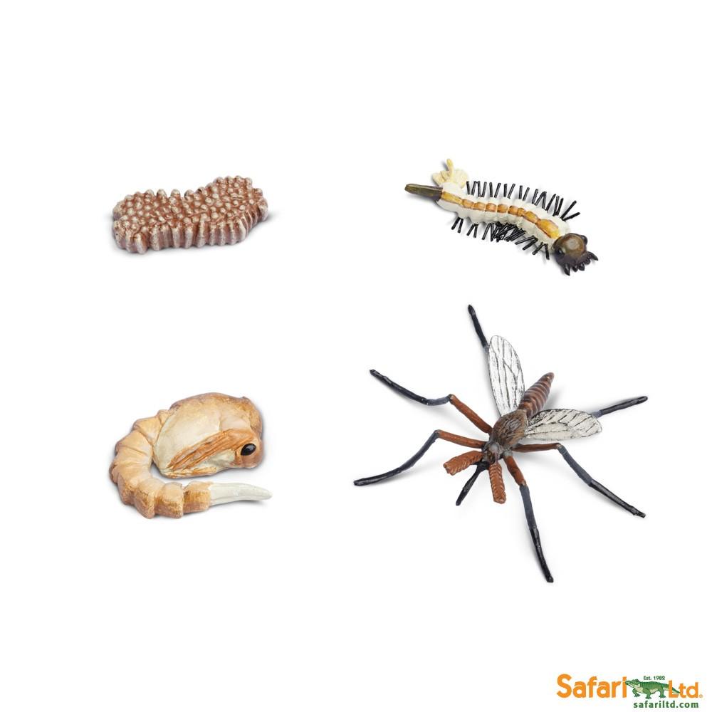 Životní cyklus - Komár