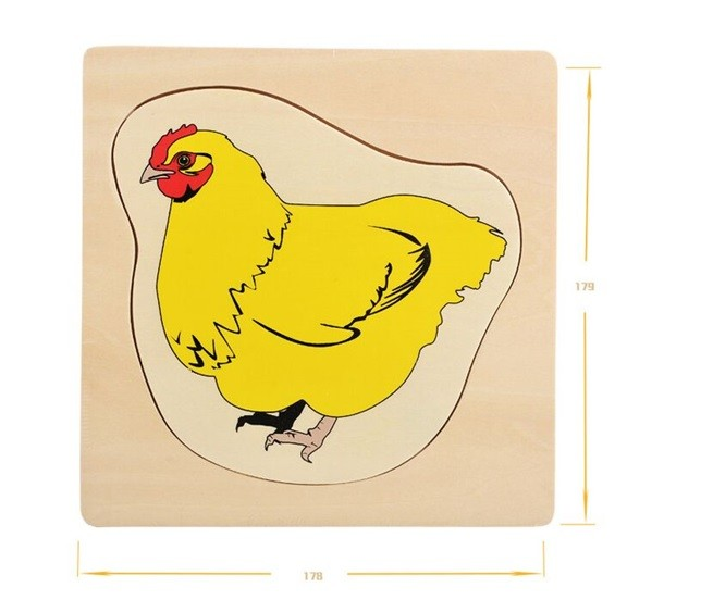 Životní cyklus kuřete