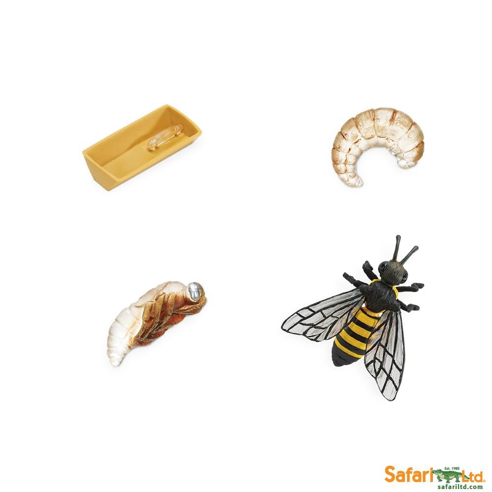 Životní cyklus - Včela