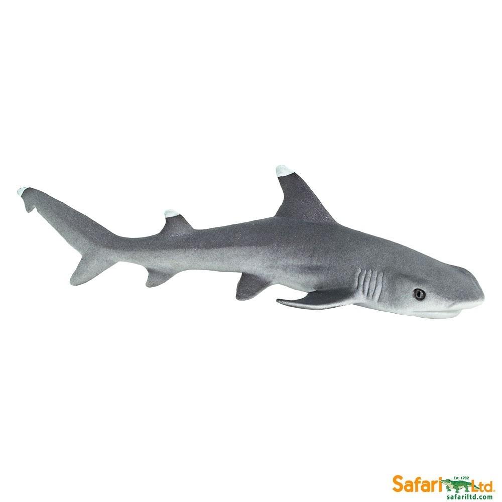 Žralok lagunový