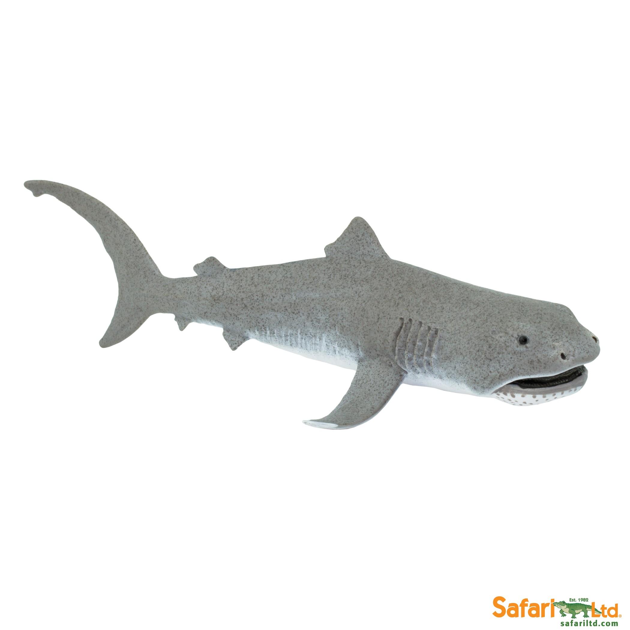 Žralok velkoústý