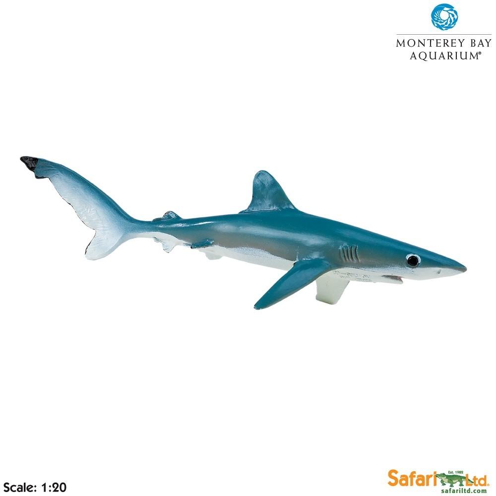 Žralok modrý